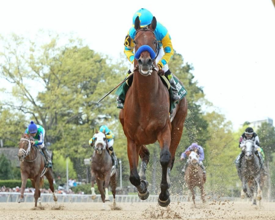 American Pharoah doing American Pharoah things