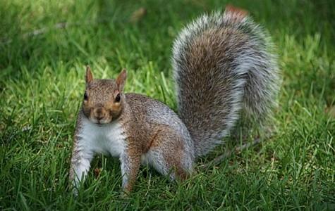 Squeaky Squirrel Surplus