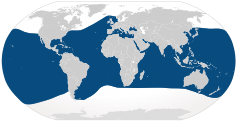 The range of bottlenose dolphins.