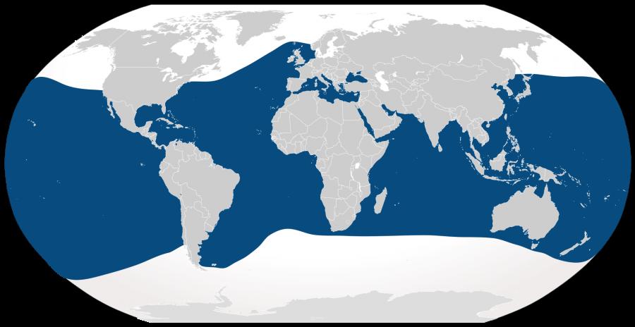The range of bottlenose dolphins.