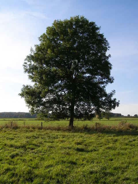 i love trees:)