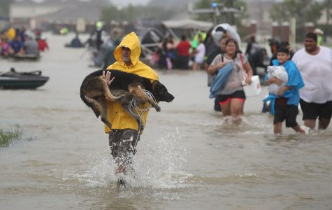 A woman carries a stranded dog through the flood waters after hurricane Harvey.