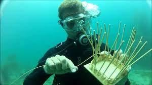 Underwater Basket Weaving will be offered to juniors and seniors and will be taught by Coach Aydt.